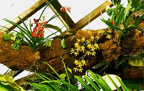 Tropical Rainforest Plant List - epiphyte tree in the exotic rainforest rare tropical plants
