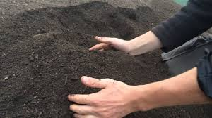plants on sale at home depot for black friday download garden mulch for sale solidaria garden