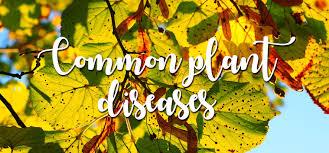 Common Plant Diseases - common plant diseases upcountry garden centre u0026 bakehouse