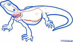 how to draw a bearded dragon bearded dragon lizard step by step