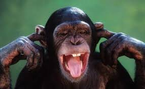 Funny Monkey Meme - create meme the primacy of the primacy of monkey funny monkey