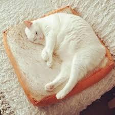 pet bed cat toast shaped mat sponge cushion 16 11 online