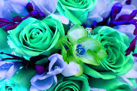 mint green flowers doodlecraft colorful bouquet of flowers wallpaper background