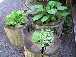 tree stump planters outdoor christmas urn arrangements