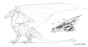 dragon anatomy sketches by osmatar on deviantart