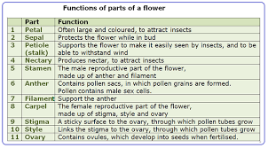 flower structure biology notes for igcse 2014