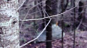 Seeking You Lost Wings Getting Lost In The Woods A Story About Seeking Shelter From The