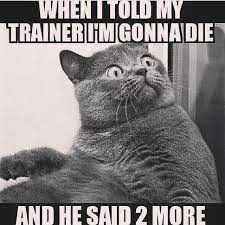 Personal Trainer Meme - personal trainer funny fitness pinterest personal trainer