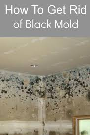 Kill Carpet Mold 3668 Best Black Mold Images On Pinterest Mold Removal Cleaning