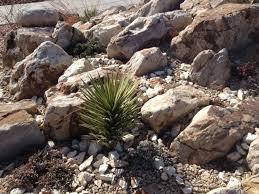 visit to apex crevice garden arvada colorado forum topic