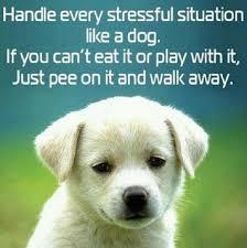 Funny Stress Memes - animal meme