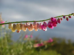 Hanging Flowers Hanging Flowers By Stragoth On Deviantart