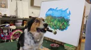australian shepherd dogtime jumpy the dog creates amazing art video dogtime