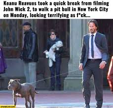 Keanu Reeves Meme - keanu reeves memes starecat com
