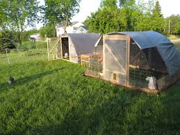 Chickens Backyard Backyard Chickens Hoop Coop Home Outdoor Decoration