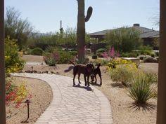 Arizona Front Yard Landscaping Ideas - front yard desert landscapes page 3 of 3 1 2 3 dream garden