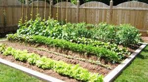 beginner vegetable garden gardening ideas