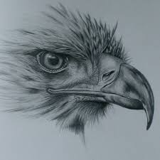 the 25 best bird drawings ideas on pinterest bird tree tree