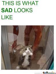 Sad Kitty Meme - cute but sad kitty by fallenhobo meme center