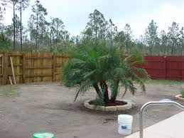 Beautiful Landscaping Ideas Outdoor U0026 Garden Beautiful Landscape With Robellini Palm Tree For