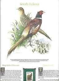state bird of south dakota south dakota state bird flower color print ring necked pheasant