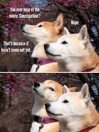 Dog Jokes Meme - omg new dog joke meme lol pinterest movie dog jokes and meme