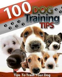 australian shepherd training tips the 1545 best images about puppy training tips on pinterest