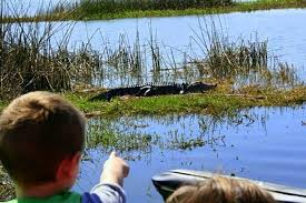 fan boat tours florida orlando airboat tours wild florida airboat tours orlando