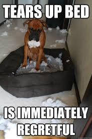 Dog In Bed Meme - tears up bed is immediately regretful regretful dog quickmeme