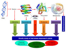 high heat plants ijms free full text physiological biochemical and molecular