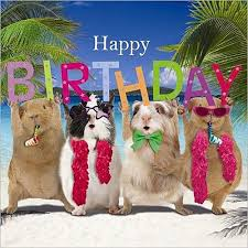 funny guinea pig birthday card birthday party happy birthday