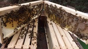 bee removal bradenton fl 941 457 2337 bee and yellow jacket