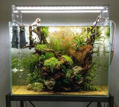 home aquarium 6 of the most clever home aquariums mnn mother nature network