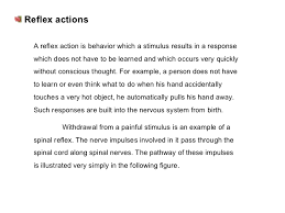 What Is A Reflex Action Example Nervous System