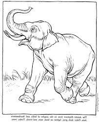 asiatic elephant coloring coloring pages adults