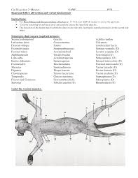 anatomy of the cat gallery learn human anatomy image