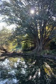 Botanical Gardens Cafe Melbourne by Melbourne U0027s Top 5 Gardens Taravels