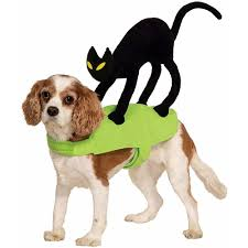 17 cute dog halloween costume you don u0027t want to miss for this year