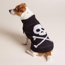 halloween sweaters skull and crossbones knit dog sweater dog doggies and pup