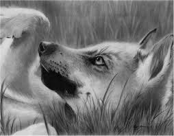 realistic drawings of wolves pups how to draw a wolf pup realistic