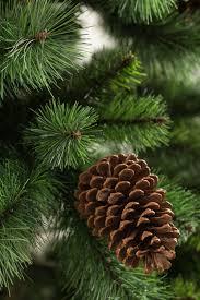 pine christmas tree the farms at pine tree barn members mark 7