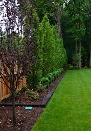 Backyard Landscaping Ideas On A Budget 25 Trending Backyard Landscaping Privacy Ideas On Pinterest
