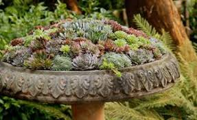 Succulent And Cacti Pictures Gallery Garden Design Succulent Gardens Garden Design
