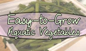 easy to grow aquatic vegetables for your water garden the