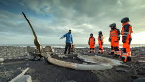atv northern lights tour iceland whale jaw bone geoiceland day tours reykjavik