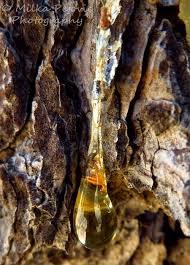 31 best hars tree sap resin images on resin