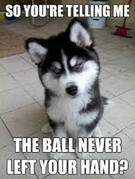 Funny Husky Memes - captioned dog pictures cute and funny pictures and more the look