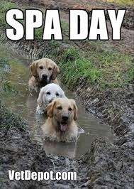 Rainy Day Meme - put your rain coats on it s raining funny cats and dogs 24 pics