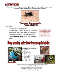 remove standing water to thwart the asian tiger mosquito morris