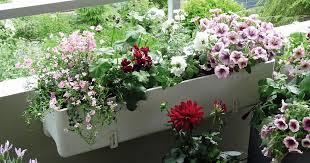 balkon blumen balkonblumen richtig einpflanzen mein schöner garten